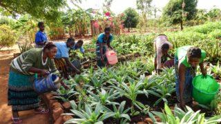 Zu wissen, wie man Obst und Gemüse anbaut, ist in Mosambik enorm wichtig. Deshalb gehört auch dieses Thema in Nametória zum Unterricht für die Frauen. Foto. Sr. Leila de Souza / SMMP
